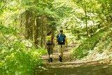 thumbnail - Idyllischer Waldweg Wäller Tour Eisenbachtal