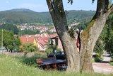 thumbnail - Naturdenkmal Linde