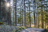 thumbnail - Wanderweg rund um den Taubensee
