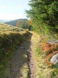 thumbnail - Weg am Hinterwaldkopf