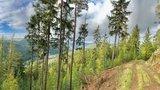 thumbnail - Waldweg am Rennsteig