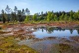 thumbnail - Moor bei den Franzosenwiesen