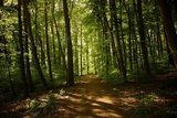 thumbnail - Wanderweg durch schattigen Wald in der Weltenburger Enge