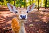 thumbnail - Reh im Wildgehege im Albertpark