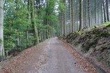 thumbnail - Links der schöne Buchenwald, rechts der mystisch wirkende Nadelwald