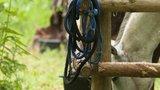 thumbnail - In den Pausen eines Mehrtagesrittes stärken sich die Pferde am saftigen Gras Mecklenburg-Vorpommerns