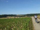 thumbnail - Kraichgauer Hügelland bei Neckarbischofsheim (Brunnen-Tour)