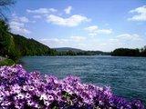 thumbnail - Blüten am Rheinufer