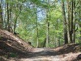 thumbnail - Gemütlicher Waldweg