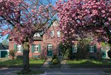 thumbnail - Kirschblüte Kolonie Meerbeck