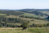 thumbnail - Kuh auf der Weide