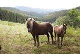 thumbnail - Bergwiesen am Schmantel