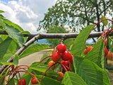 thumbnail - Radweg an den Obstplantagen