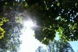 thumbnail - kleiner Kurpark Prien am Chiemsee