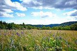 thumbnail - Blick über die Bergwiese
