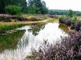 thumbnail - Rundweg Drover Heide