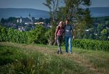thumbnail - Wanderweg auf dem Mainzer Berg