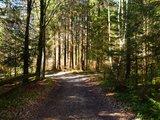 thumbnail - Auf breiten Waldwegen geht es von Seeshaupt in Richtung Frechensee.