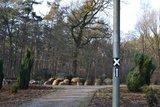thumbnail - Die Düwelsteene in Heiden liegen am Hauptwanderweg X 3