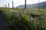 thumbnail - Blumen am Wegesrand