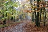 thumbnail - Herbststimmung im Tiergarten