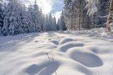 thumbnail - Winter nahe Grünbach