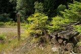thumbnail - Immer gut markiert: Der Trödelsteinpfad