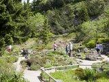 thumbnail - Eine interessante Alpenflora gibt es im Rennsteiggarten zu bestaunen.