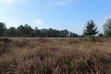 thumbnail - Unterwegs in der Venloer Heide