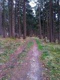 thumbnail - Waldweg um den Hohenberg