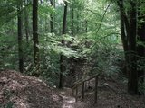 thumbnail - Auf der Hexentreppe