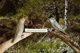thumbnail - Die Vögel in den Schaukästen sind aus Ton gefertigt und handbemalt
