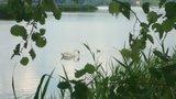 thumbnail - Peitzer Teichlandschaft