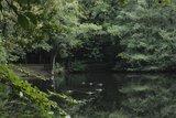 thumbnail - Enten auf dem Teich