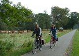 thumbnail - Radfahrer und Landschaft