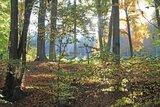 thumbnail - Waldstimmung