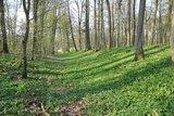 thumbnail - Grabenanlage im Frühling