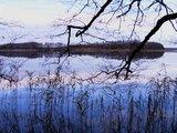 thumbnail - Der Anteil der Wasserflächen und Röhrichte beträgt im Nationalpark Müritz 13 Prozent.