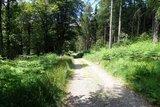 thumbnail - Breite Schotterwege und naturnahe Pfade prägen das Bild des Rundwanderweges
