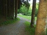 thumbnail - Waldstück entlang des Ohetal-Radweges