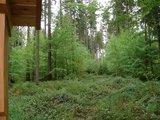 thumbnail - Der Wald im Wandel