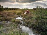 thumbnail - Grafschafter Moor