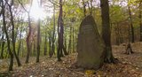 thumbnail - Gedenkstein Christian Roese, dem Schöpfer dieses Bergwaldes