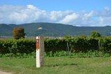 thumbnail - Ausblicke auf dem Biblischen Weinpfad