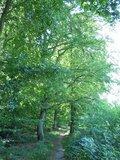 thumbnail - Abwechslungsreiche Flora und Fauna im Bienwald