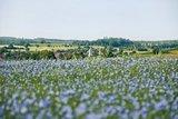 thumbnail - Blick auf Medelsheim in der Biosphäre Bliesgau