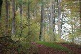 thumbnail - Wälder um den Blasenberg