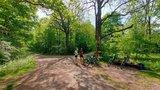thumbnail - Radfahren im Nationalpark Hainich, hier beim Pausieren an der Betteleiche