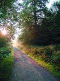 thumbnail - Morgenstimmung in der Leucht