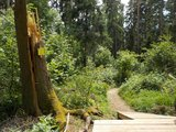 thumbnail - Teilabschnitt des Schellenberg-Trails